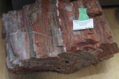 bois-fossile-Arizona