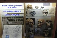 hominidés