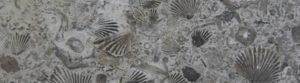 [Annulé] 12/02 – Et bien oui !, il y a des fossiles à Montréal